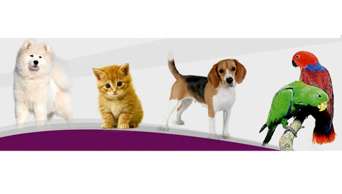 Centro Veterinario Friendly y Pets S.A.C.
